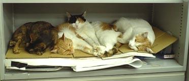 開発室の色校置き場を占領する野良猫4匹